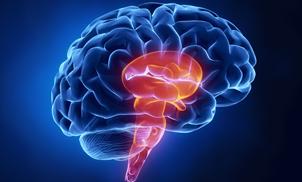 Study: Brain May Act as Valium on Epileptic Seizures - Greg Jones