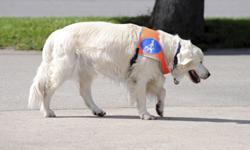Seizure Alert Dogs for Epileptics